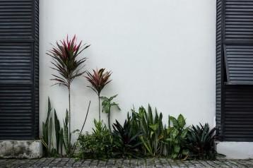 nature - Salvador de Bahia, Brésil - photographie © Marc Dumas